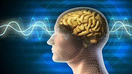insan-beyin